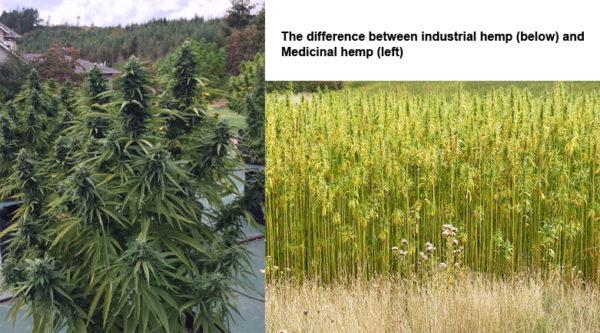 Medicinal Hemp CBD