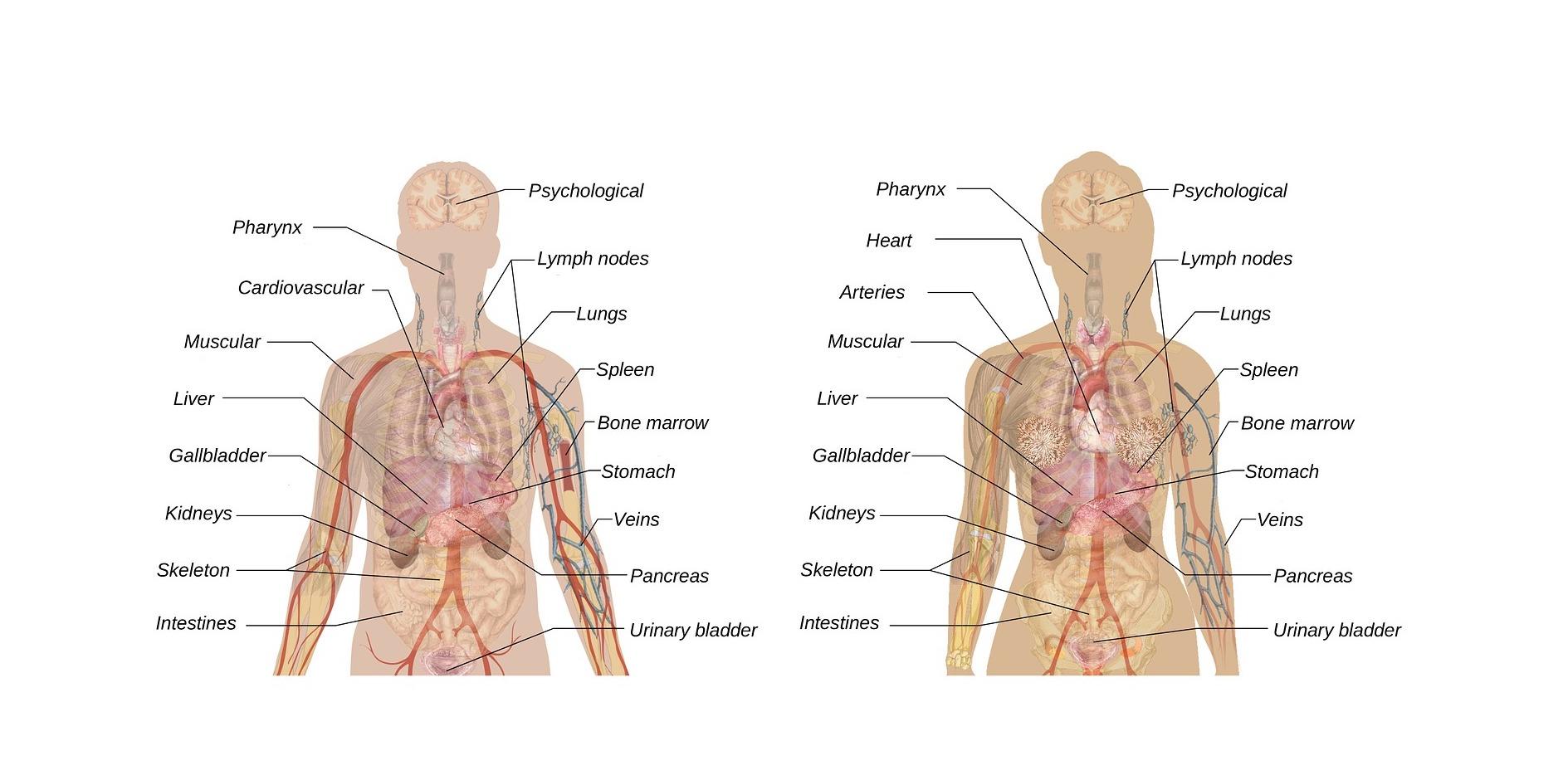 CBD and Liver